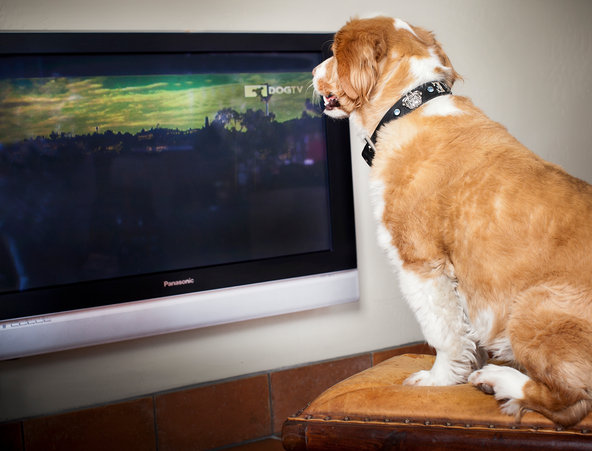 5 Different Television Options For The Avid Consumer