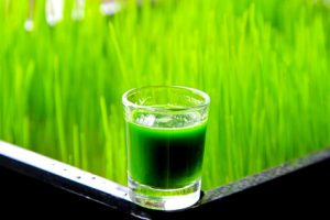 5 Easy Tips On How To Juice Wheat Grass