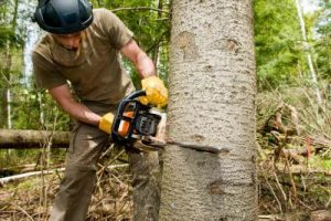 How To Remove That Dangerous Tree From Your Yard