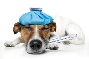 The Overview and The Benefits Of Pet Insurance Companies