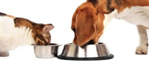 Top 4 Facts About Pet Food