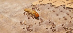 Termite Inspection Delray Beach – A Clear Picture Of Termites and What They Can Do