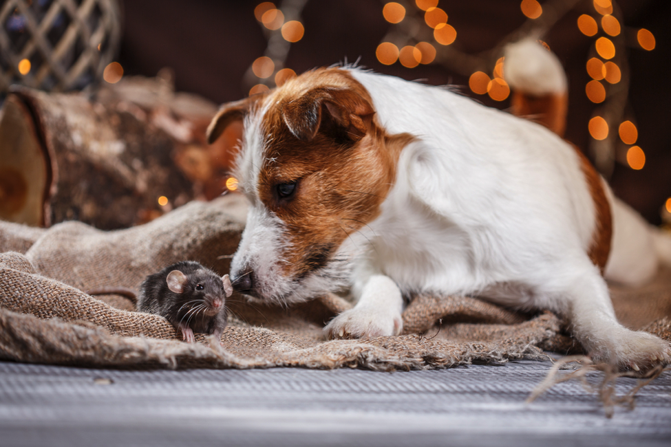 Puppy Playtime: Avoiding Bad Activities For A Growing Dog