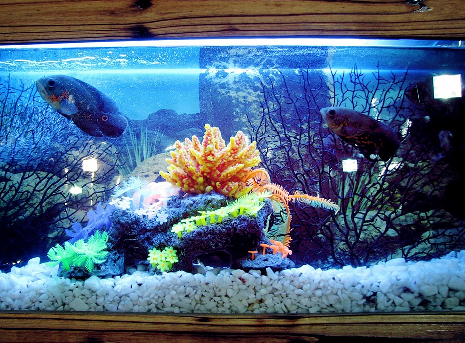 decorate aquarium ideas