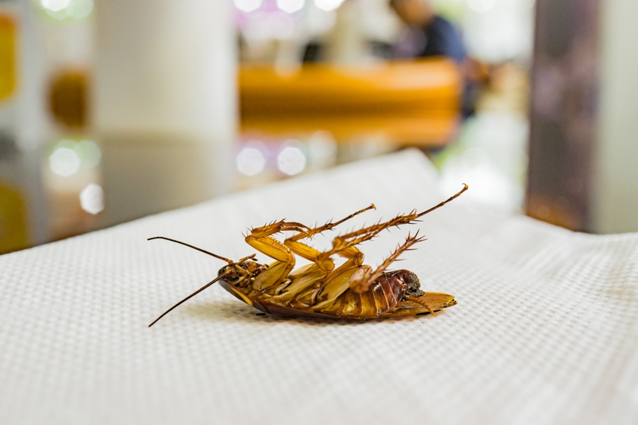 Why Pest Control Services Are Necessary For Restaurant Owners