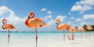 8 Underrated Places Of The Caribbean That You Must Explore