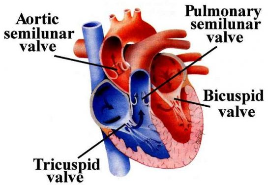 Heart Valve Replacement Surgery In India