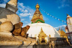Monkeys of Swayambunath
