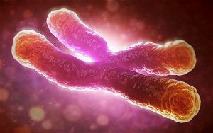 Telomeres Keepers of Genetic Coding
