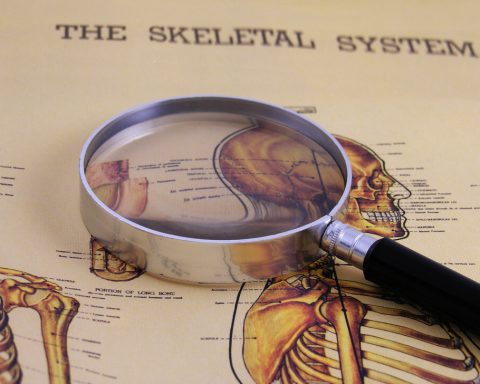 10 Interesting Facts About Your Skeletal System